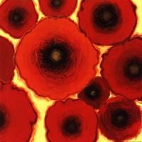 "One Orange by Shirley Novak - 18"" x 18"", FulcrumGallery.com brand"