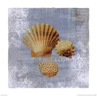 "Tidal Treasures by Wild Apple Studio - 12"" x 12"""