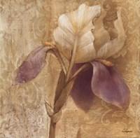 Brocade Iris Framed Print