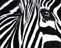 Black and White II Framed Print