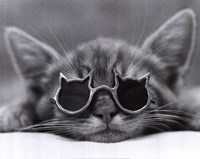 Cool Cat I Fine Art Print