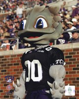 "Texas Christian University Horned Frogs Mascot 2003 - 8"" x 10"" - $12.99"