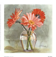 Tangerine Gerbera Fine Art Print