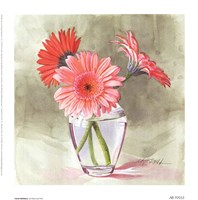 "Coral Gerbera by Mary Kay Krell - 7"" x 7"""