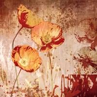 "Poppy Heat II by Tandi Venter - 28"" x 28"""