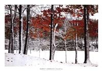 SnowFall Fine Art Print