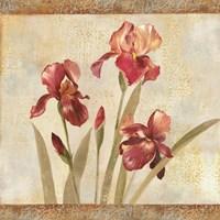 Iris Tapestry I Fine Art Print
