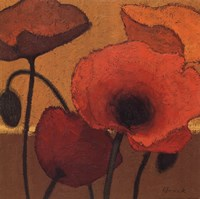 "Poppy Curry I by Shirley Novak - 18"" x 18"""