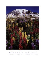 Mt. Rainier Fine Art Print