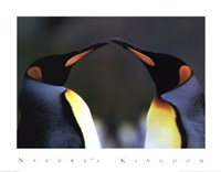 King Penguins Fine Art Print