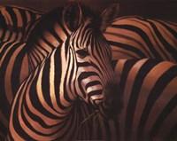"""28"""" x 22"""" Zebra Art"""