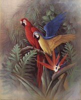 Exotic Birds Fine Art Print