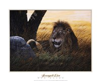 Serengeti Lion Framed Print