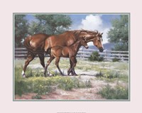 Horse and Colt Fine Art Print