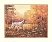 Hunting Dog Framed Print
