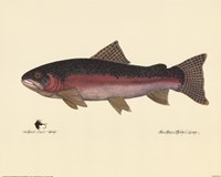 Steelhead Trout Fine Art Print