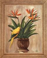 "Bird of Paradise by Ron Jenkins - 16"" x 20"""