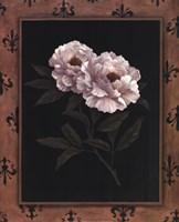 Peony Fleur Fine Art Print