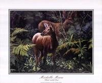Black - Tailed Deer Fine Art Print