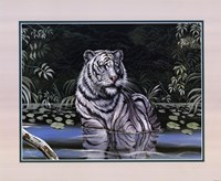 Wading White Tiger Fine Art Print