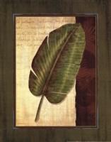Palm Tropical II - grande Fine Art Print