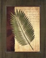 Palm Tropical III - grande Fine Art Print