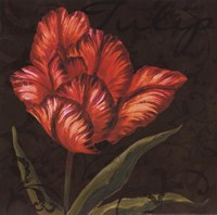 "Tulipa I by Jillian Jeffrey - 12"" x 12"""