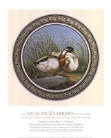 Two Ducks, (The Vatican Collection) Fine Art Print