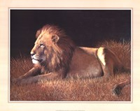 Majestic Lion Fine Art Print