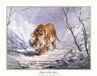 Tiger In The Snow Fine Art Print