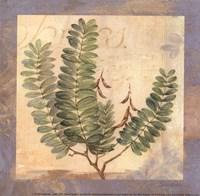 Leaf Botanicals I - petite Framed Print