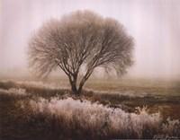 Tranquility I Framed Print