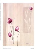 Shades Of Pink ll Fine Art Print