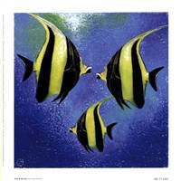 "7"" x 7"" Fish Pictures"