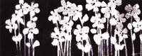 "White Flowers on Black I by Norman Wyatt Jr. - 20"" x 8"""
