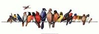 "37"" x 13"" Bird Pictures"