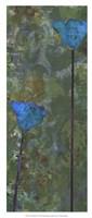Teal Poppies IV Fine Art Print
