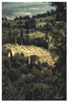 """Tuscan Vineyard by Terry Lawrence - 25"""" x 37"""""""