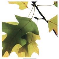 Inflorescent Leaves III Fine Art Print