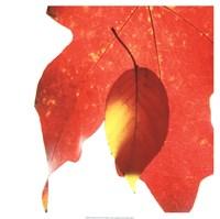 Inflorescent Leaves IV Fine Art Print