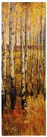 Vivid Birch Forest II Framed Print
