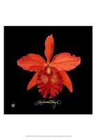 Vivid Orchid IX Fine Art Print