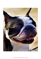 "13"" x 19"" Boston Terrier Pictures"