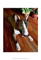 Bull Terrier Down Fine Art Print