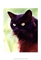 "13"" x 19"" Black Cat Pictures"