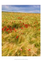 """Poppies in Field II by Colby Chester - 13"""" x 19"""" - $12.99"""
