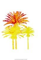 Sunny Palm II Fine Art Print