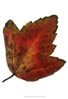 """Leaf Inflorescence I by A. Project - 13"""" x 19"""", FulcrumGallery.com brand"""