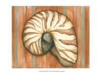 "Shell on Stripes IV - light by Laura Nathan - 19"" x 13"""