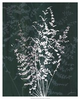"Jewel Ferns II by James Burghardt - 17"" x 21"""
